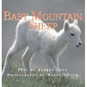 Baby Mountain Sheep (Nature Babies) (9781554550425