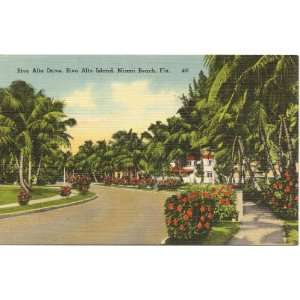 1950s Vintage Postcard Rivo Alto Drive on Rivo Alto Island Miami Beach