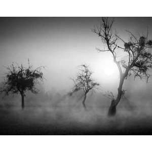 Trees in the fog II by Tom Weber 36x28: Kitchen & Dining