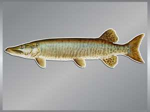 MUSKELLUNGE vinyl fish decal Fishing Car Sticker