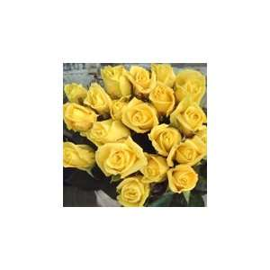 200 Premium Long Stem Roses yellow Patio, Lawn & Garden