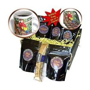 Florene Birds   Live Parrot On Tropical Tree   Coffee Gift Baskets