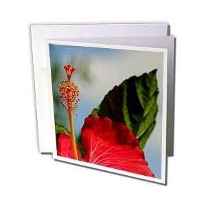 Bunga Raya   bunga raya, flower, flowers, hibiscus, hibiscus rosa