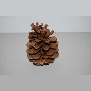 one) Large Bison Pine Cone Geocache Cache Containers