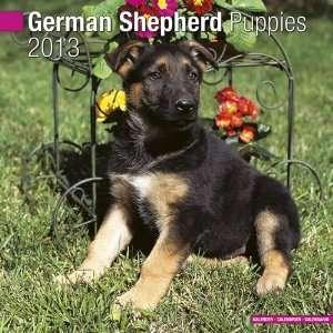 German Shepherd Puppies 2013 Wall Calendar 12 X 12