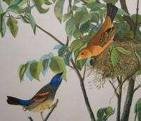 1860 Audubon Bien Edition Bird Print of Blue Grosbeak
